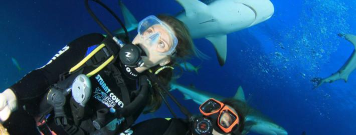 Mergulho com tubarões: mais uma aventura incrível de Karina Oliani