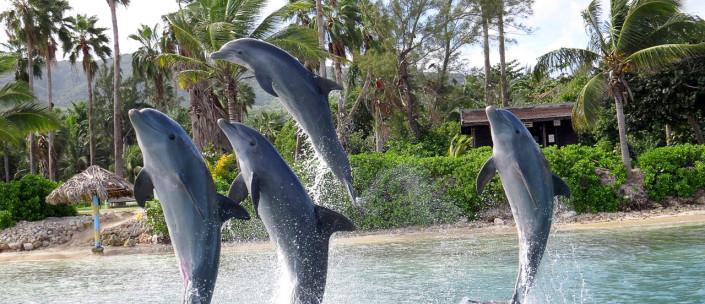 foto: divulgação Half Moon Resort