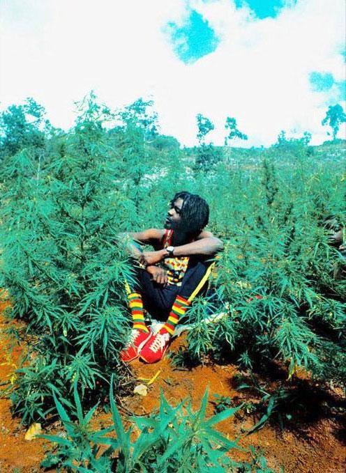 Peter Tosh: militância a favor da descriminalização da maconha sempre foi uma marca do cantor.  |  foto: reprodução internet