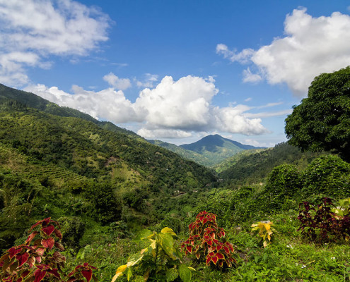 As Blue Mountains agora são Patrimônio Mundial da Humanidade | foto: reprodução internet